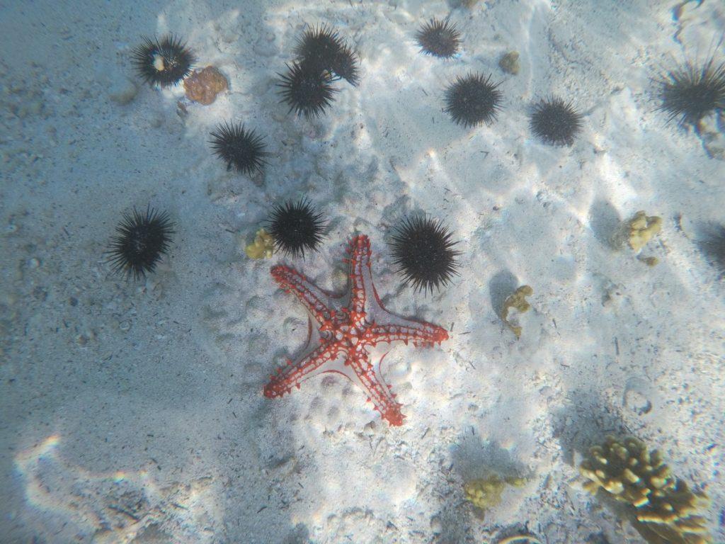 Vorsicht vor Seeigeln im Sansibar-Urlaub