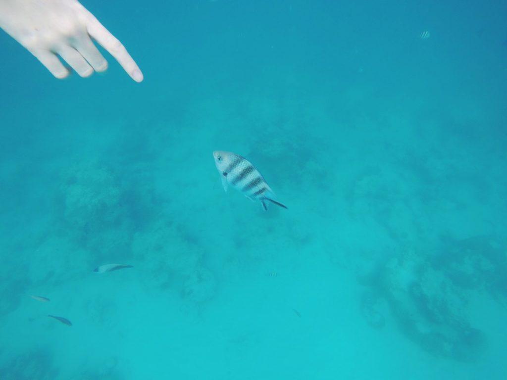 Schnorcheln im Sansibar-Urlaub